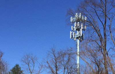 A cell tower stands over the trees