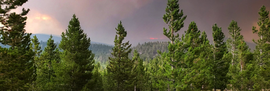 """FirstNet Authority logo; """"Helping firefighters face a historic wildfire season amid pandemic""""; a wooded area full of fir trees; smoke billowing over the horizon."""