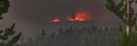 Fire burns on a smoky horizon with pine trees in the foreground
